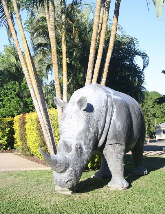 Attractions White Rhino